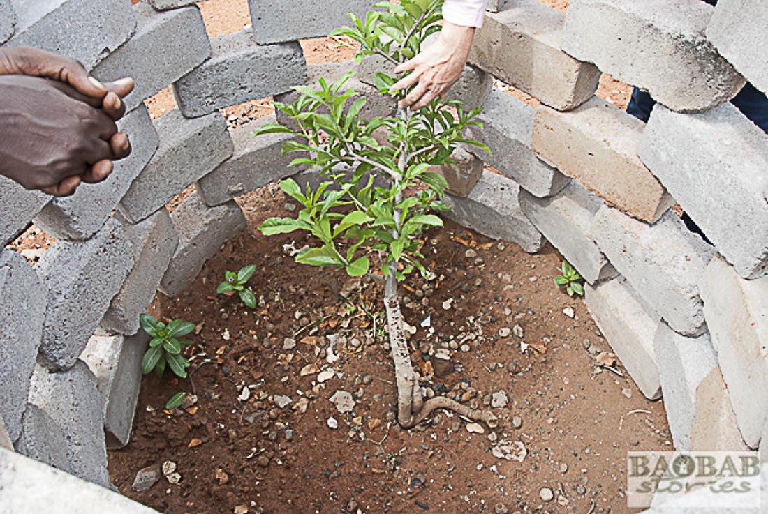 Baobab Schutzzaun, Limpopo, Südafrika, Heike Pander