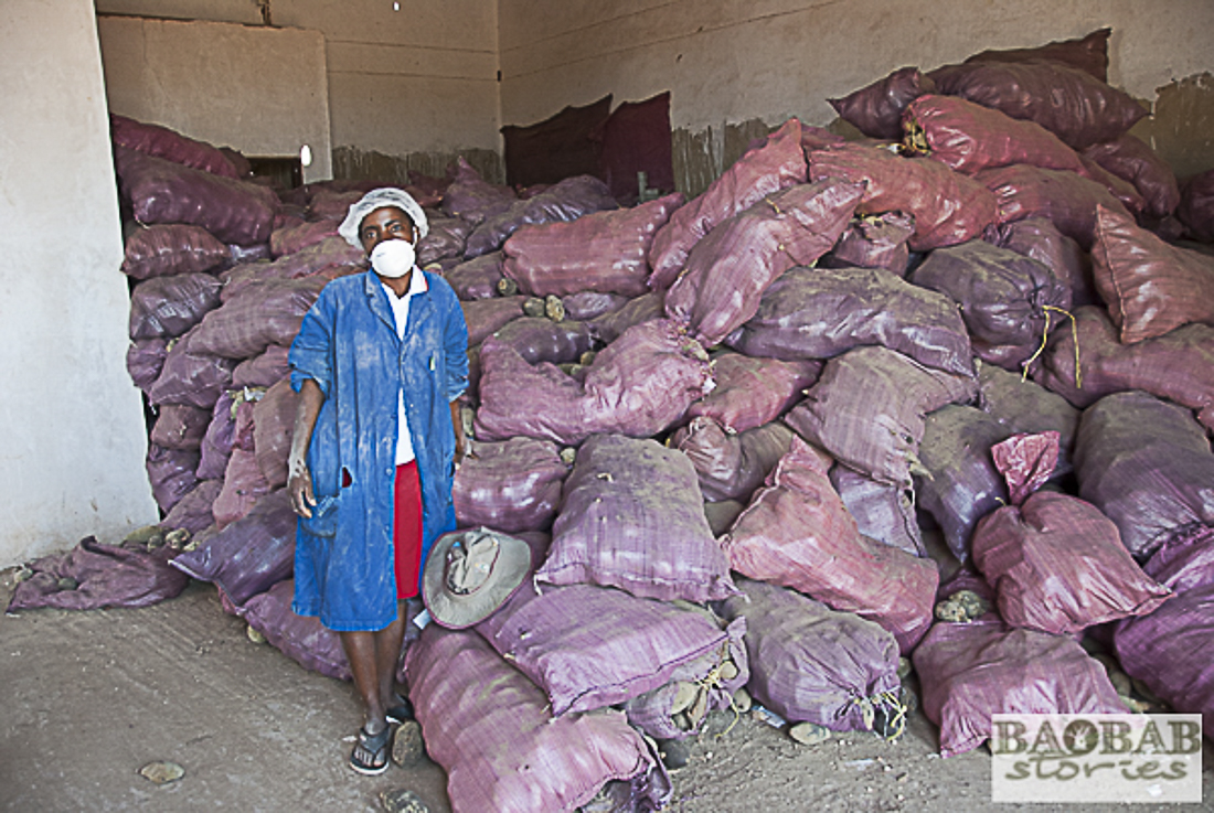 Arbeiterin bei der Verarbeitung von Baobab Früchten, Simbabwe, Heike Pander