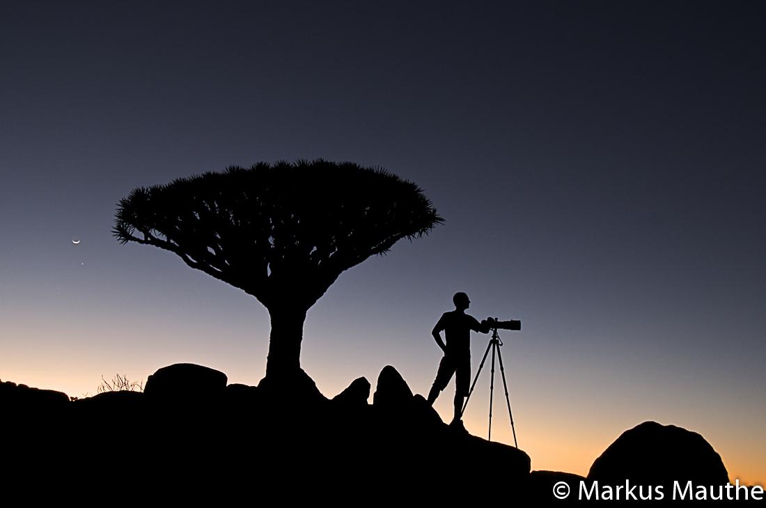 Drachenblutbaum, Haggher, Berge, Sokotra, Jemen, Markus Mauthe