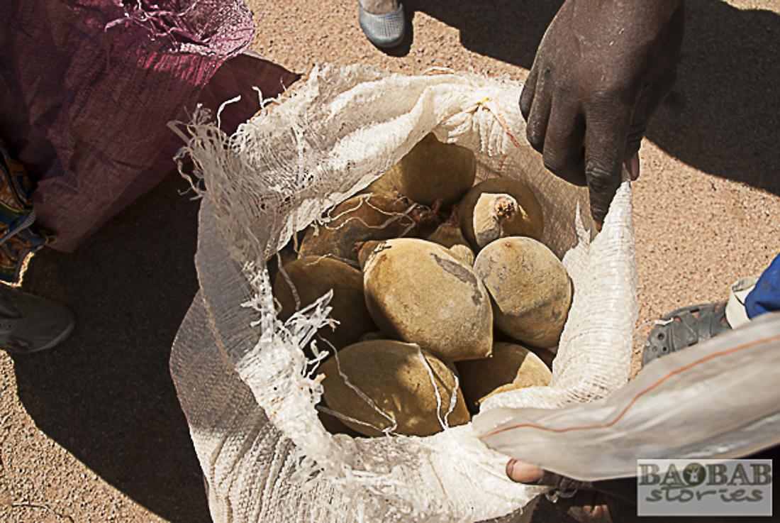 Baobab Früchte, Sammelstelle, Heike Pander